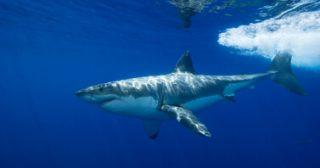 サメよけウェットスーツサーフィンダイビングボディーボードシャークアタック